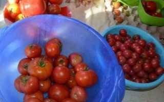 Томат Виттас: характеристика и описание сорта, особенности выращивания