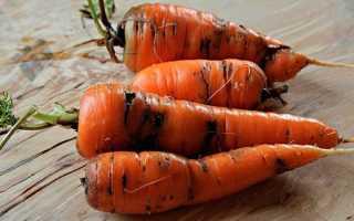 Борьба с морковной мухой