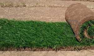 Рулонные газоны – продажа и укладка рулонного газона