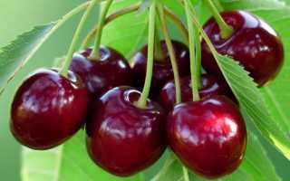 Болезни вишни и вишни: описание с фото и методами лечения