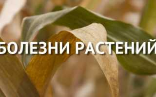 Основные группы вредителей и болезней плодово-ягодных культур