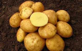 Описание картофеля Винета