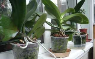 Правила посадки орхидеи дома
