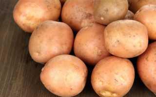 Характеристика сорта картофеля Ирбитский