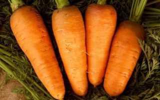 Особенности моркови сорта Шантане