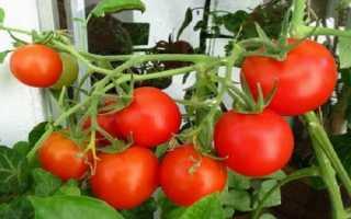Фрегат Tomato Scarlet f1: описание и характеристика сорта с фото