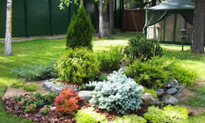 Растения, используемые в зеленом строительстве и благоустройстве