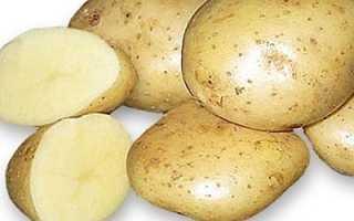 Характеристика картофеля сорта Удача