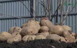 Урожайность картофеля с гектара и с гектара