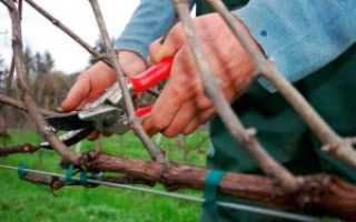 Особенности обрезки винограда весной