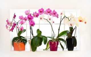 Выбор кашпо для орхидей