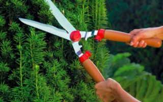 Как выбрать секатор, сучкорез, садовые ножницы